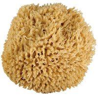 Sea Sponge (medium)