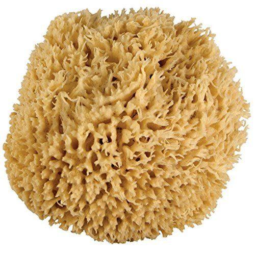 Sea Sponge (large)
